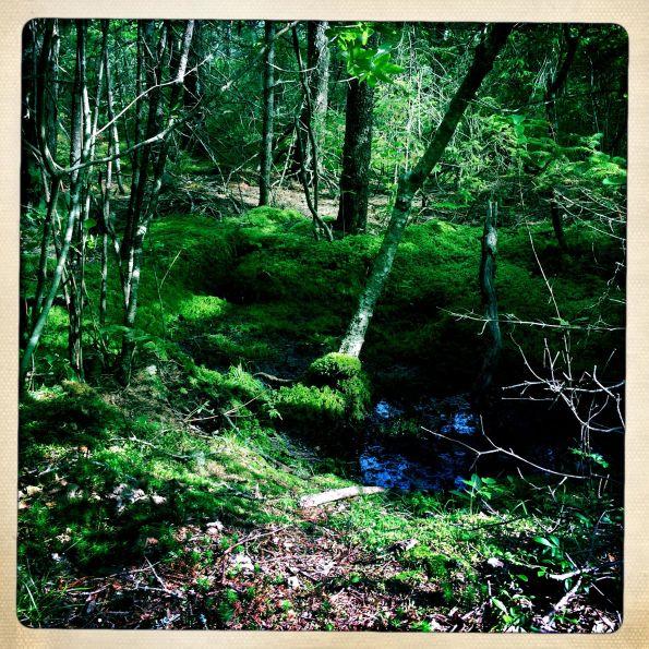 Along the Wonderland Trail