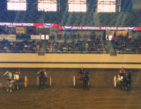 Draft Pony Ladies Carts
