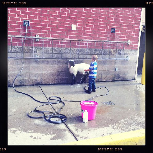 Rinsing the Sheep