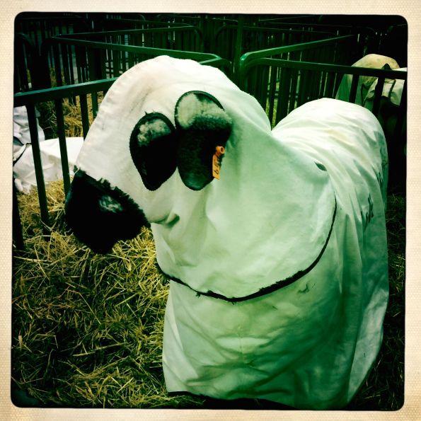 Masquerade Sheep