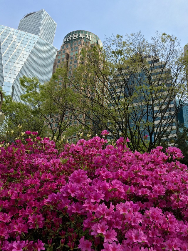 I love the juxtaposition of the flowers and skyscrapers